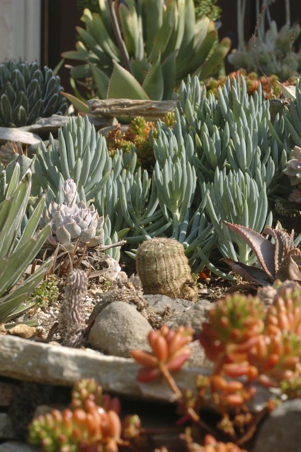 Ventura County Succulents Cactus Jungle