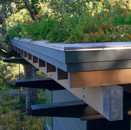 11-living-roof-detail-green-roof