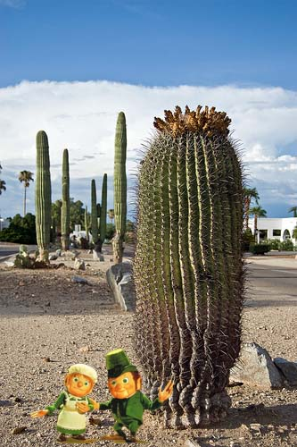 LEPRECHAUNS-and-giant-saguaro-cacti