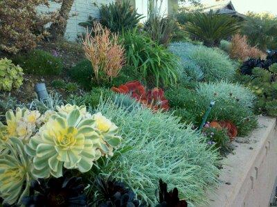 Succulent Garden San Diego Cactus Jungle