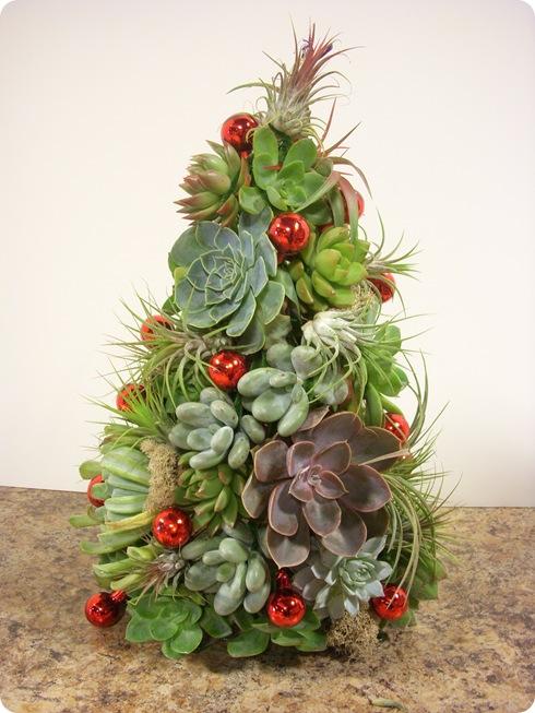 succulent christmas tree