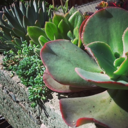 Succulent Trough 2