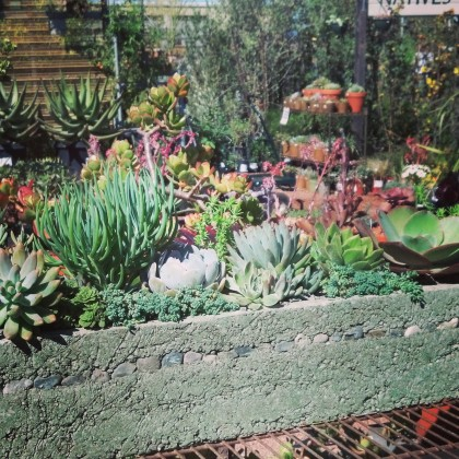 Succulent Trough