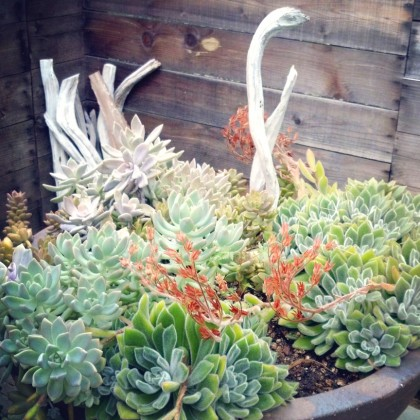 mixed-succulents