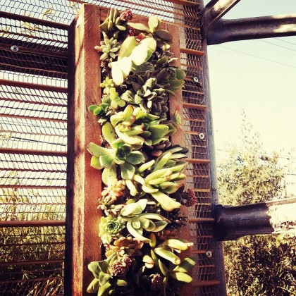 Hanging Succulent Wall Panels