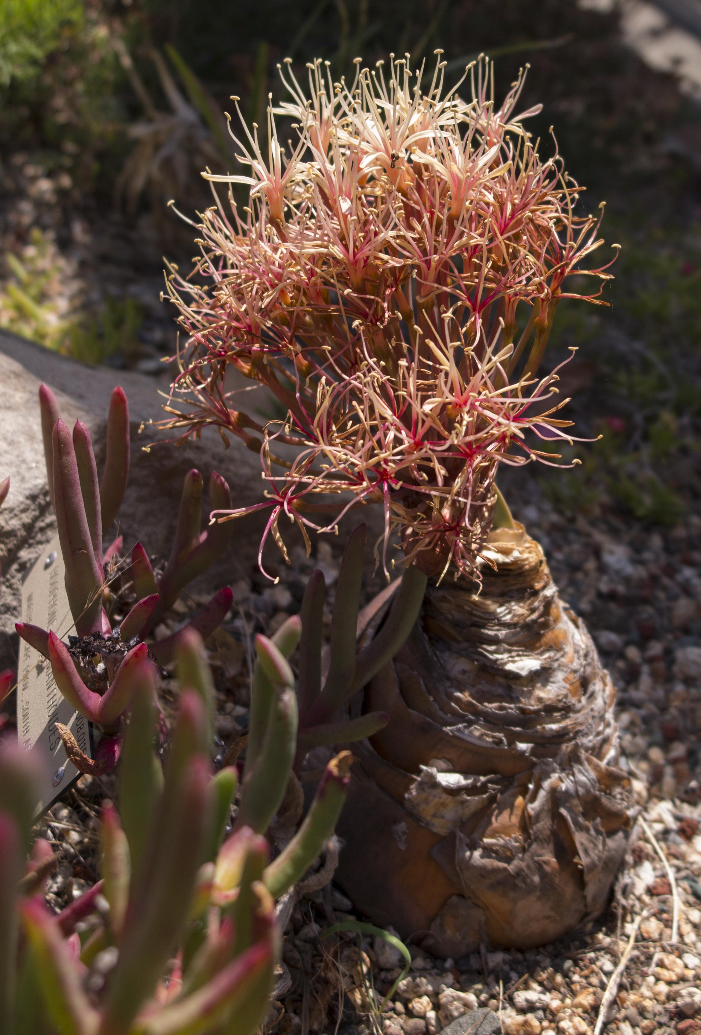 Botanic Gardens Archives - Cactus Jungle