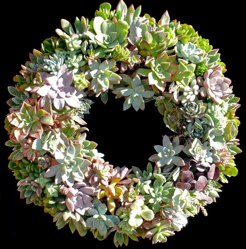 succulent_wreath_2011_large