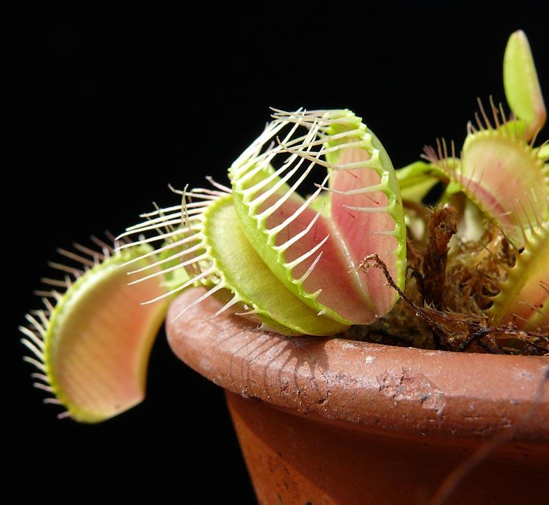 search carnivorous plant photos