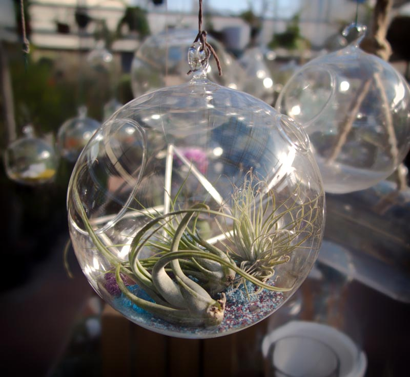 Glass And Terrariums Cactus Jungle