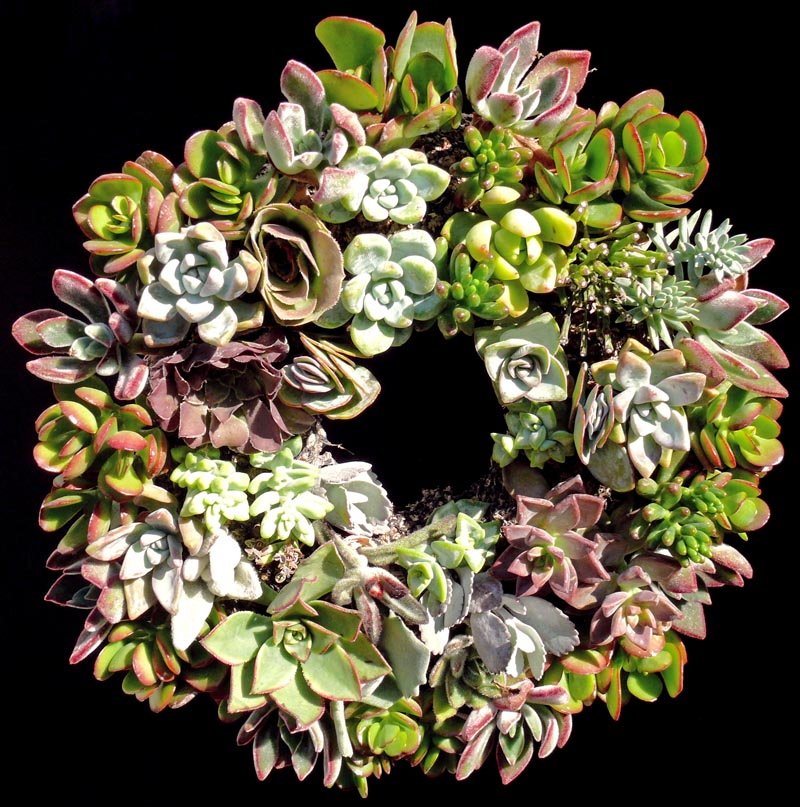 succulent_wreath_2011_small