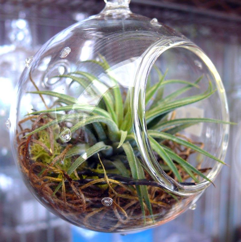 Glass And Terrariums Cactus Jungle