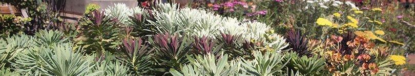 Drought tolerant plants for the sf bay area cactus jungle - Drought tolerant grass varieties ...