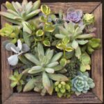 succulent_wall_panel_2016