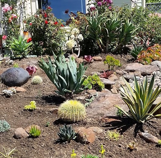 vallejo succulent garden design and installation