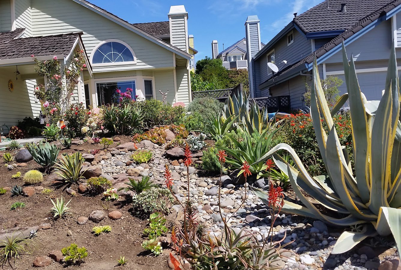 Beau Lawn Replaced With New Succulent Garden. Our Installation And Design  Incorporated A New Sweeping Dry Creek Bed And Tied In With The Existing  Agave ...