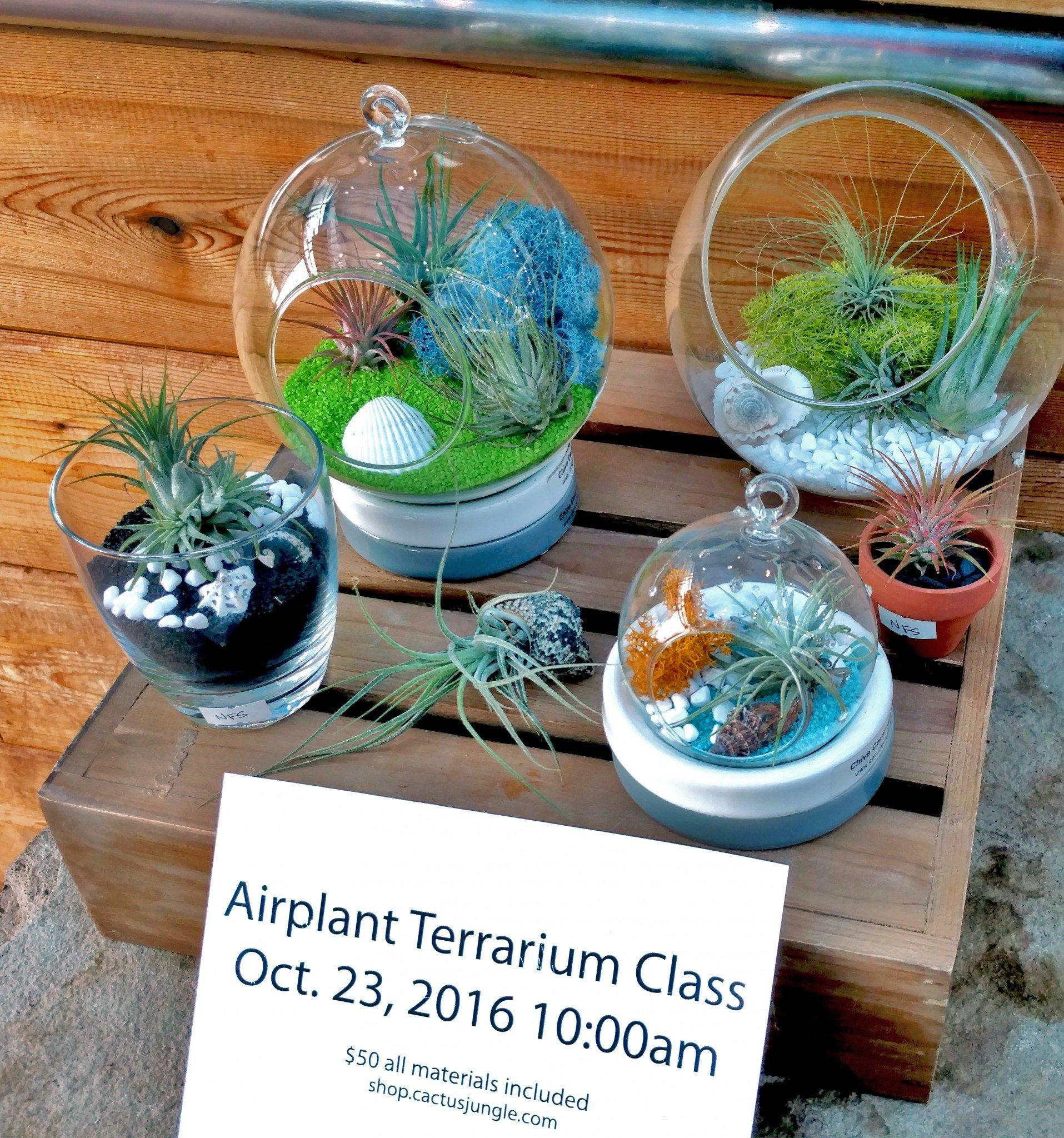 airplant_terrarium_class