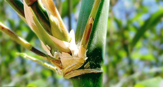 Bamboo Bay Area - Cactus Jungle