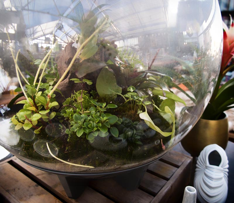 glass and terrariums