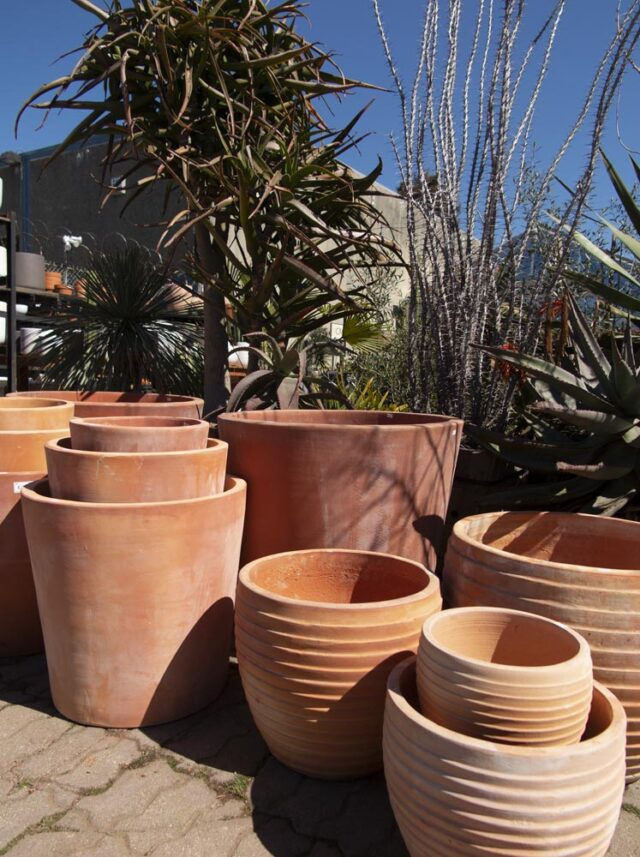 Pottery Glazed And Terra Cotta Pottery Cactus Jungle