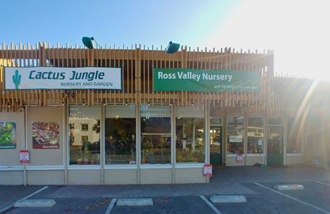 ross_valley_nursery_at_cactus_jungle.jpg